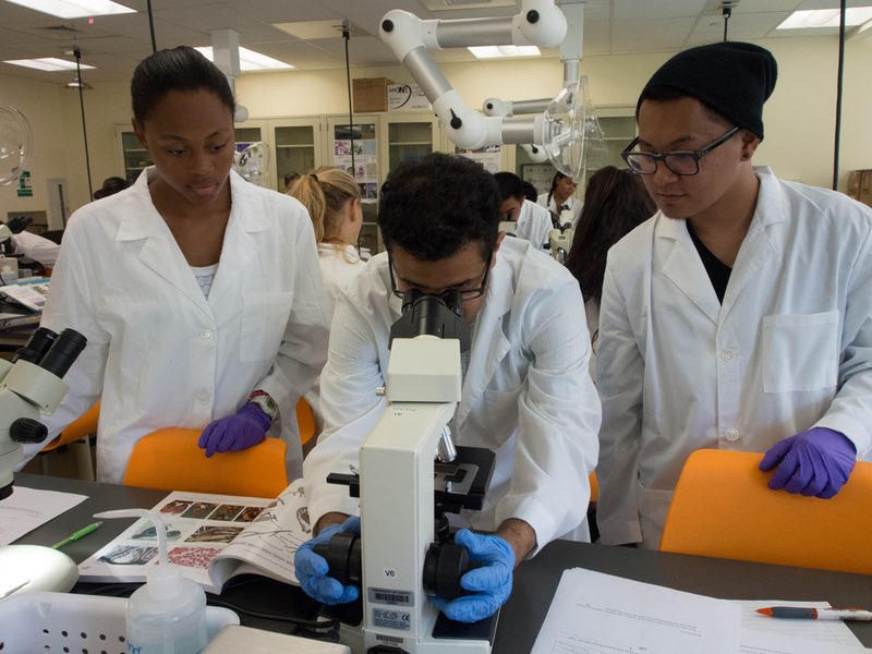 Biology students in a lab